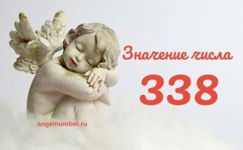 значение числа 338