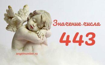 значение числа 443